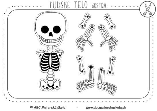 Ľudské telo - Kostra